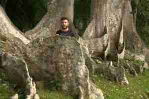 raices de árboles