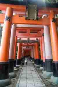 enormes toris de Fushimi Inari
