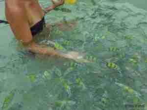 dando de comer a los peces de las Hong Island