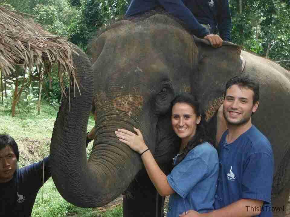 Amamos los elefantes