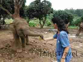 Dandole comida al elefante baby