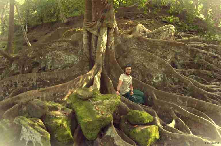 jardines mágicos en Goa Gajah
