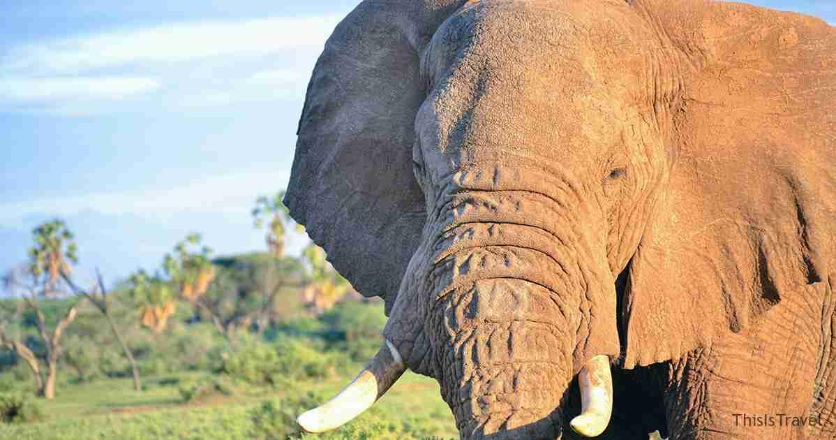 elefante samburu