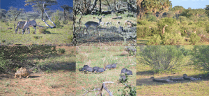 animales samburu kenia