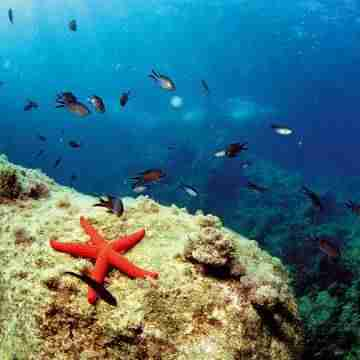 fondo marino Javea
