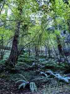 bosques encantadores en Bizkaia
