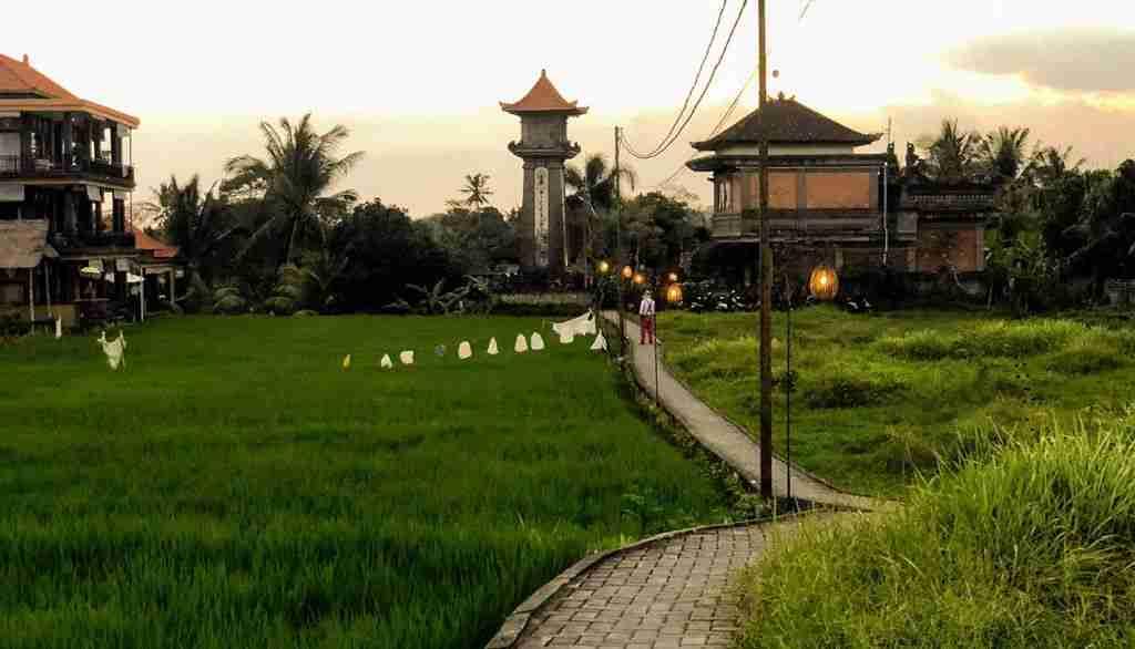 arroz ubud bali
